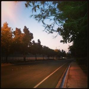 131005 trees