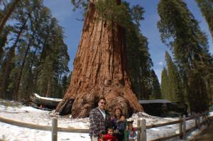 060420 Sequoia