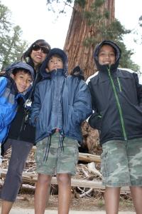 120529 Sequoia