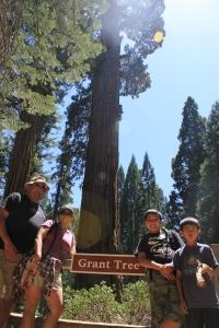 130616 Sequoia